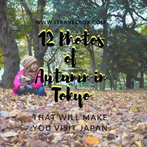 12 photos of autumn in tokyo
