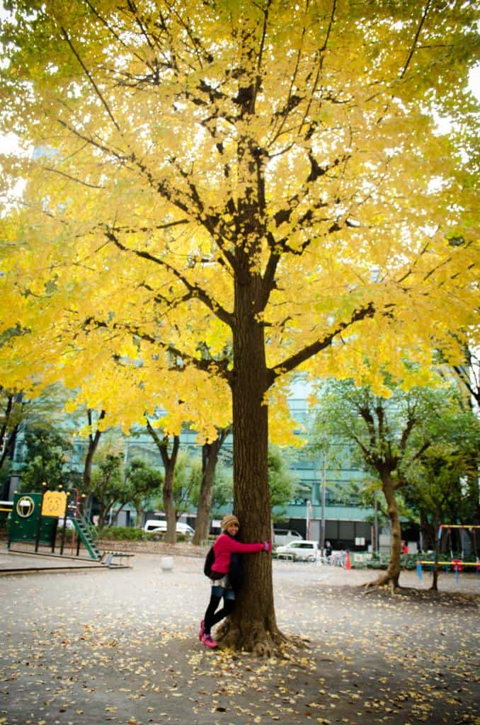 hugging a gingko tree