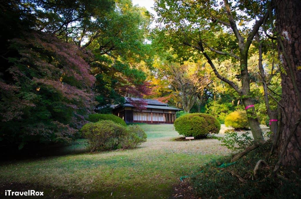 Autumn Tokyo Japan 2