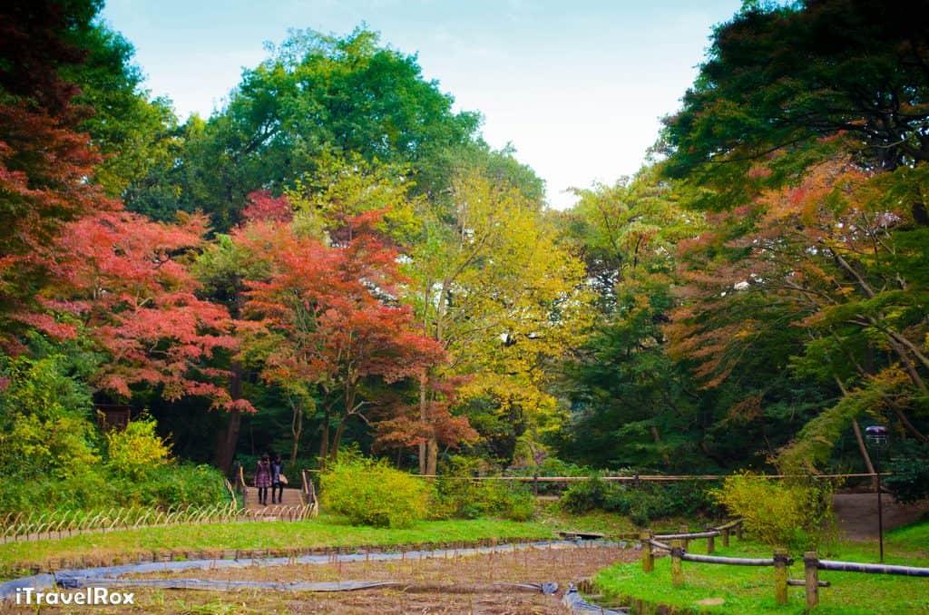 Autumn Tokyo Japan 4