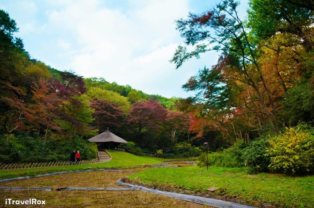 Autumn Tokyo Japan 5