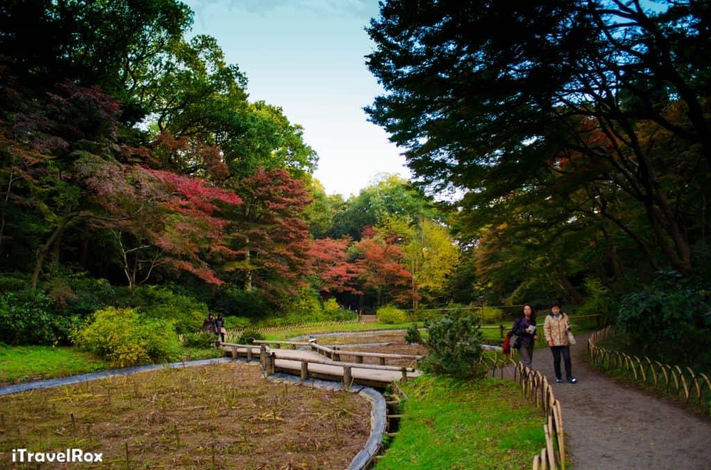 Autumn Tokyo Japan 7