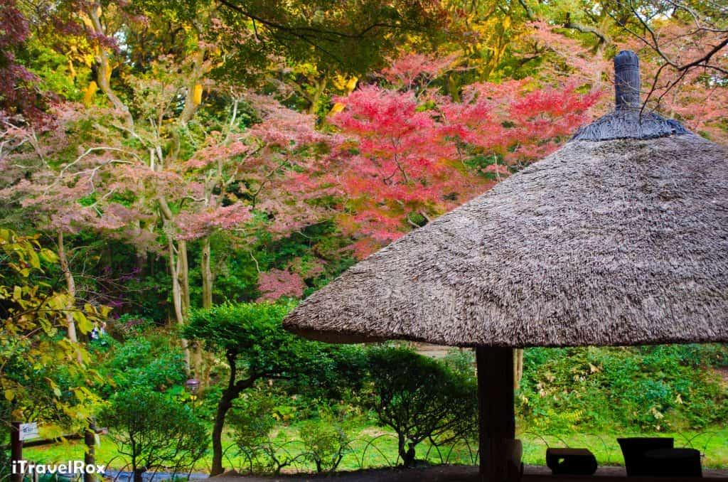 Autumn Tokyo Japan 8