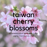 Taiwan Cherry Blossoms at Yangmingshan National Park 2017