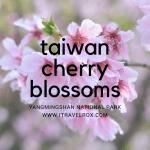 Taiwan Cherry Blossoms at Yangmingshan National Park 2017