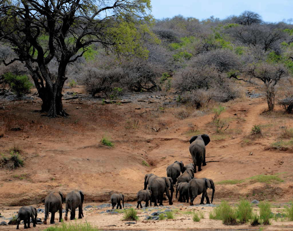 Safari Holiday elephant