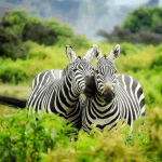 5 Benefits of Heading Off on a Safari Holiday